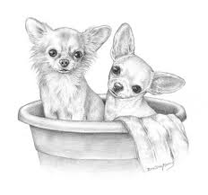 Chihuahua Drawing  looks like my Pixie  Bella  Chihuahua Love