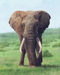 elephants paintings fine art america