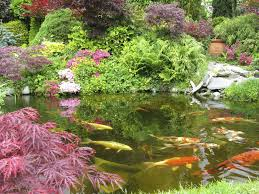 japanese koi ponds live fish pond installation new york city