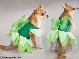Chihuahua Halloween Costume Image Detail Tails Tinkerbell Pixie Princess Halloween