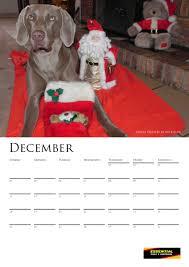 belgian shepherd for sale south africa weimaraners in south africa about the weimaraner klub of gauteng