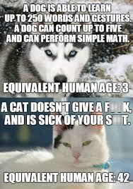 Memes For Lovers - cat lovers are more mature than dog lovers memebase funny memes