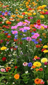 best 25 meadow garden ideas on pinterest wild flower meadow