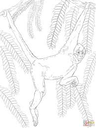 black handed spider monkey coloring page free printable coloring
