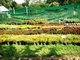 plant nursery forum niasha gardens and nursery