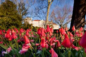 Cheekwood Botanical Garden And Museum Of Art Image Library Visit Nashville Tn Music City