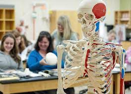 Human Anatomy And Physiology Courses Online Mcgraw Hill Connect Human Anatomy Accelerated Anatomy And