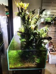 229 best aquarium terrarium vivarium paludarium images on