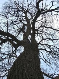 tim burton tree by strangetikigod on deviantart