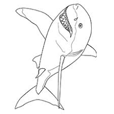 20 shark coloring pages