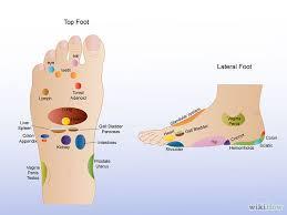 Anatomy Of A Foot Left Leg Foot Parts Human Anatomy Chart