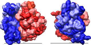 ribosome wikiwand