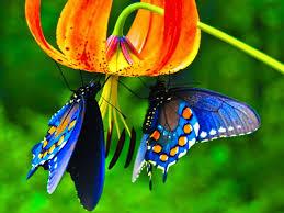 in praise of butterflies