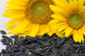 what animals eat sunflower seeds hunker