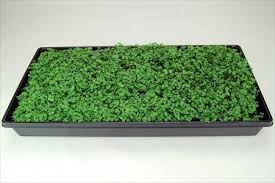 amazon com 10 plant growing trays no drain holes 20