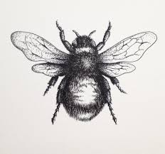 bumble bee drawing pictures bumblebee on a white background