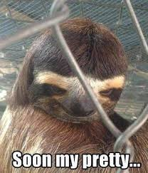 Dragon Sloth Meme - 56 best dirty sloth images on pinterest sloth sloths and funny