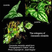 List Of Tropical Plants Names - tropical forest plants list