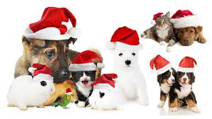 christmas cats dogs and rabbits