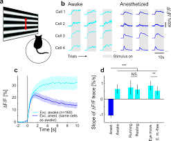 stimulus relevance modulates contrast adaptation in visual cortex