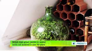 sealed bottle garden british man grows garden in sealed bottle not watered in over 40
