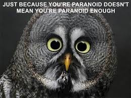 Paranoid Parrot Memes - animal capshunz paranoid parrot funny animal pictures with