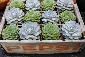 16 amazing ways to enhance your garden with recycled items