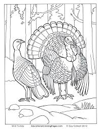 realistic animal coloring pages coloring pages printables