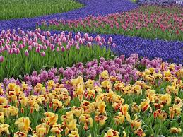 image of spring flowers because there are so many flowers blossom in the spring season and