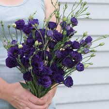 lisianthus flower doublini blue pelleted f1 lisianthus seed johnny s selected