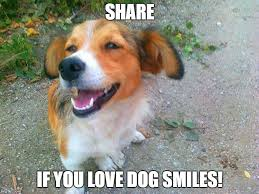 Dog Smiling Meme - 15 pictures of smiling dogs what every dog deserves