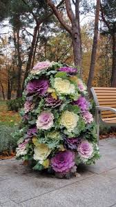 summer container care cabbage plant flower tower and autumn