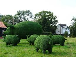 Elephant Topiary Garden Plant Sculptures Plants Living Sculpture