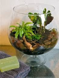 insects and disease in terrariums the gardener u0027s eden