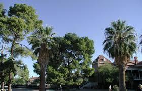 native arizona plants old main tour university of arizona campus arboretum