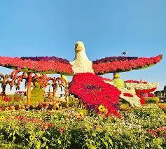 parrots at dubai miracle garden