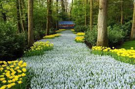 gardensonline garden of world keukenhof gardens