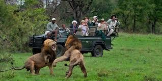 african safari animals business class luxury safari overview