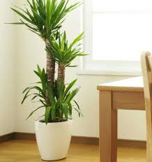 plants that grow in dark rooms good indoor plants indoor plant trees types air purifying plants air