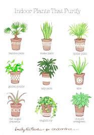 best plants for bedroom english ivy bedroom best minimalist bedroom ideas on bedroom in