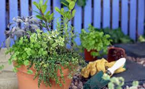 secrets to herb gardening for beginners earth u0027s friends