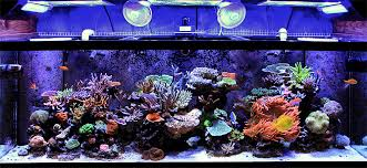 Reef Aquarium Lighting How To Reduce Aquarium Power Consumption Reefs Com