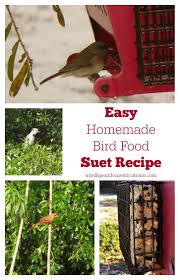 84 best birds suet recipes images on pinterest for the birds