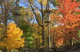 Connecticut forest images Adventure park at storrs is an amazing tree top trail in connecticut jpg