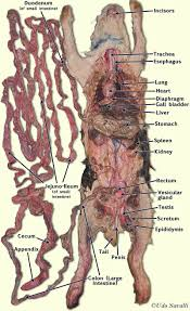 index of bio370 anatomy anatomyimages