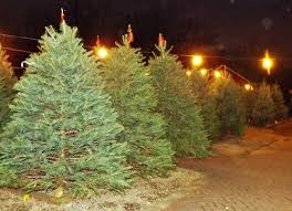 How To Trim A Real Christmas Tree - shopping archives page 9 of 20 baristanet