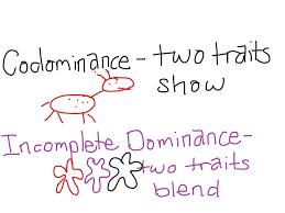 incomplete dominance vs codominance google search honors bio