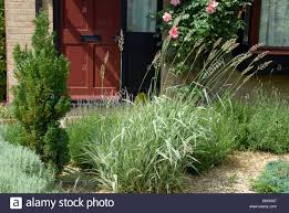 ornamental grass and plants in a front garden stock photo royalty