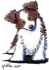 australian shepherd illustration stunning