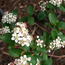 native kentucky plants go native our advice and 15 native plants to include in your